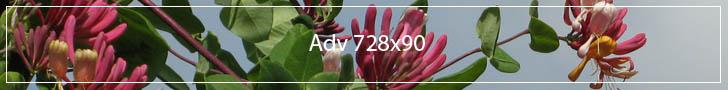 adv728x90-v1.jpg